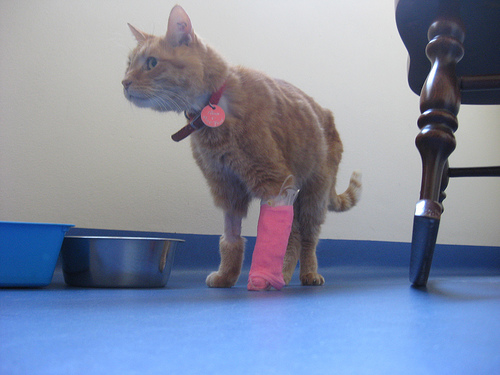 Törött lábú cicus
