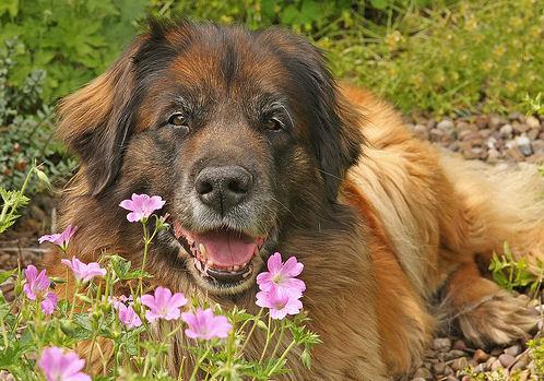 kutya és virág