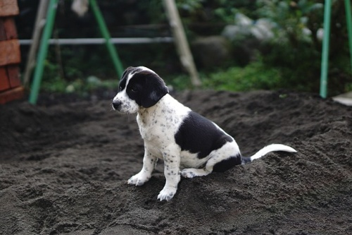 dog-2935473_640