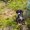 Milyen a kutyabarát kert?