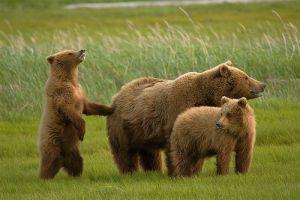 A grizzlyk parkja - Yosemite Nemzeti Park