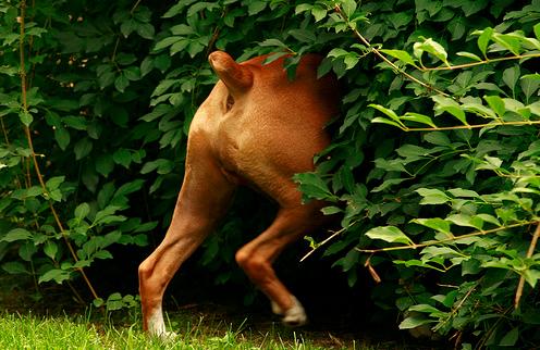 kutya játszik