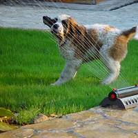 kutya fürdik, vizes kutya, kutya játszik