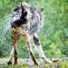 Kutyafürdetés: mikor, hogyan, mivel?