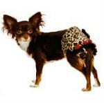 tüzelőbugyi kutyának, tüzelőbugyi