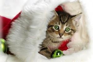 Kreatív karácsony: kiscica ajándékba