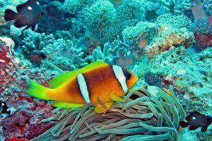 A Nagy-korallzátony titkai