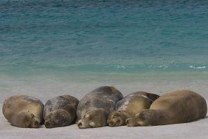Galapagos, az újévi paradicsom!