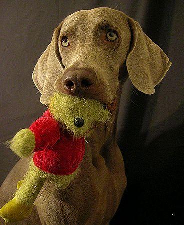 kutya játékkal