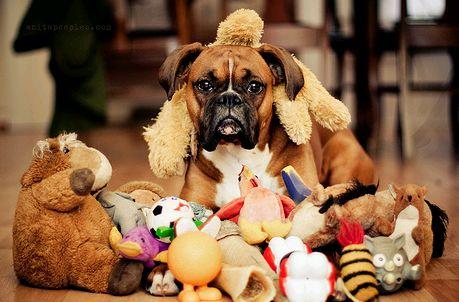 kutya játékokkal
