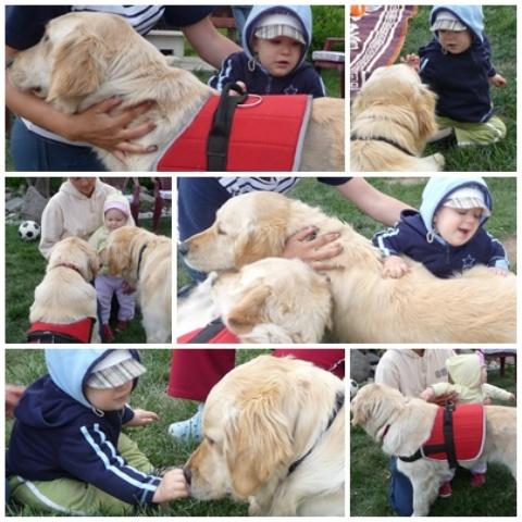 csodakutya, kutya, terápia, program
