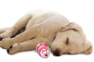 KONG - A világ legjobb kutyajátéka