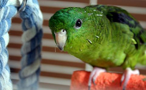 katalin-papagáj