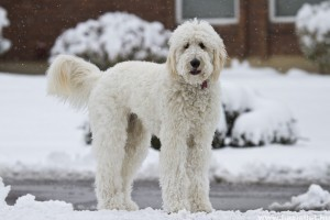 Hogyan ápoljuk télen a kutyánk lábát, bőrét?