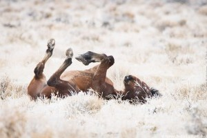A lovak is gyerekként örülnek az első hónak