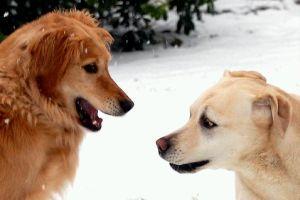 Hogyan és miért beszél a kutya?