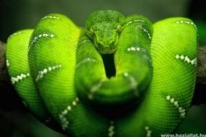 Hüllő kisokos: a kígyók eredete, evolúciója, leírása