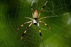 Mitől olyan erős a pókháló?