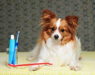 kutya, fogorvos, fogászat