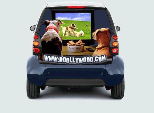 dvd-kutyaknak