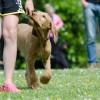 Zseni kutyák? - tanítsuk és neveljük a kutyánkat egy sikeres módszerrel! (Klikker)