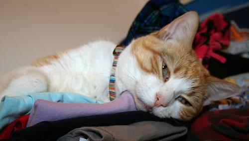 macska, betegség, műtét után