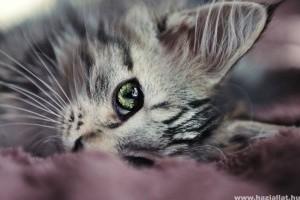 Hogyan gyógyítsuk a macska húgykövességét?