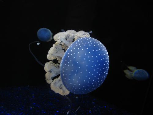 Medúza tenger