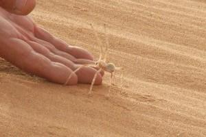 A guruló pók technikáját mi is átvehetnénk, ha sietős a dolgunk