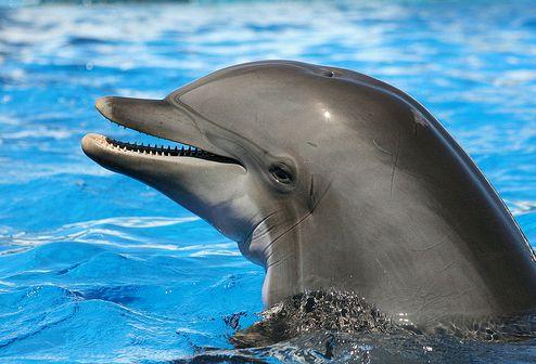 delfin-kep