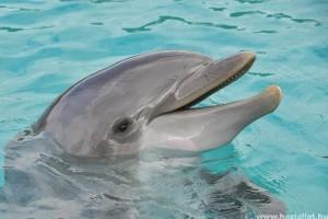 Hogyan gyógyít a delfin?