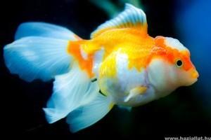 Van a halaknak memóriája?