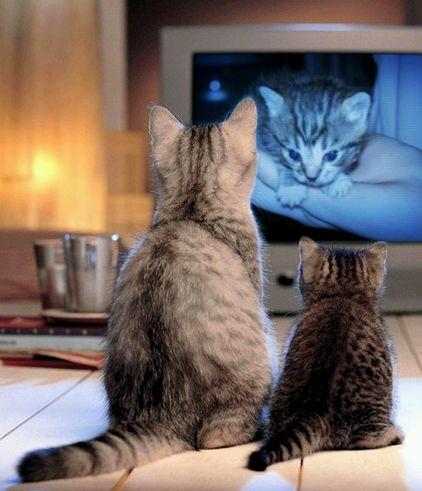 Macskák a tv előtt