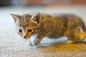 Hogyan idomítja a plüss macska, a cuki cica és a rámenős dög kedvenc gazdáját? Cicás videók!