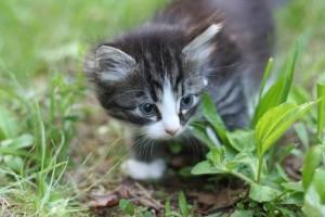 Hogyan idomítja a gazdi kedvence típusú cica és a primadonna macska gazdáját? Cicás videók!