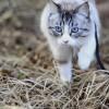 Lehet-e pórázon sétáltatni a macskát?