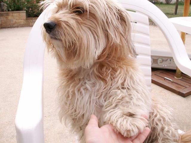 kutya, pacsiat ad