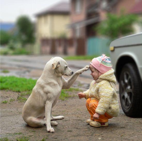 kutya, dominancia, kisbaba