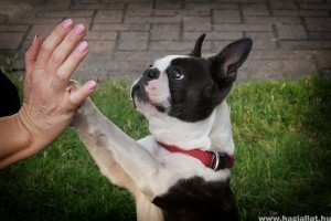 Így kommunikál a kutya  mancsával