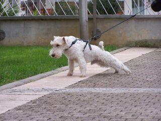 kutya, kutyasétáltatás, rángat