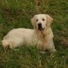 Melyik kutyafajta alkalmas vakvezetésre?