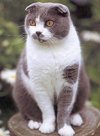 skot-logofulu-cica