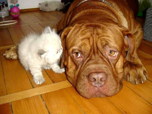 örökbefogadott, kutya, cica