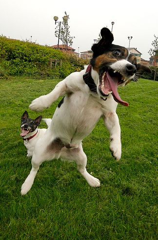 kutya-tamadas