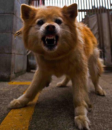 vicsorgo-kutya