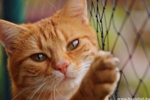 Tanuljunk macskául! Cicaszótár kezdőknek és haladóknak