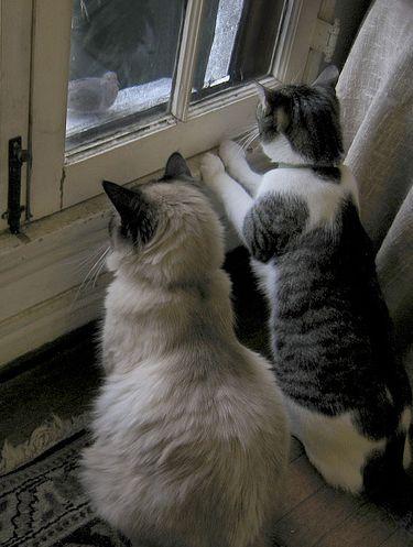 cicak-az-ablakban