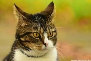 Tanuljunk macskául! Cicaszótár kezdőknek és haladóknak 2. rész
