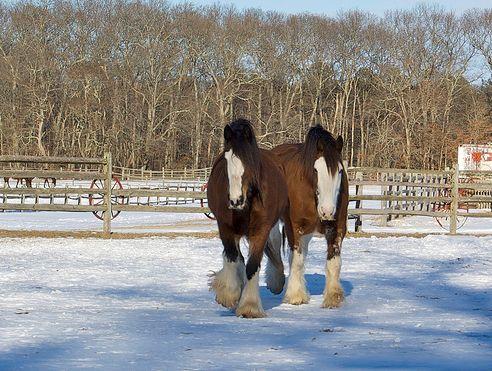 ló, lovas, hóban