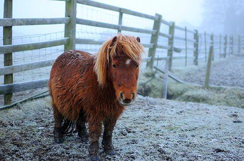 tél, ló, hó